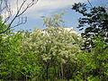 Гази Баба - Растителен свет (105).JPG