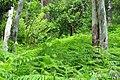 Грузия, ботанический сад - panoramio (1).jpg