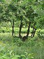Донецкий ботанический сад 018.jpg