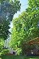 Золотоворітський сквер - пам'ятка природи. Фото 1.jpg