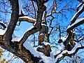 Кочубеївські Дуби у Регіональному ландшафтному парку «Диканський» 6.jpg