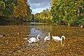 Лебеді в Олександрії.jpg