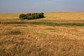 Лесополоса на восток - panoramio.jpg