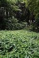 Лісова поляна з кропиви.jpg