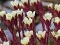 Необычные северные цветы.jpg