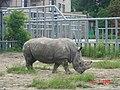 Носоріг у київському зоопарку.jpg