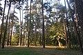 Пермь. Черняевский лес, участок за ДКЖ 2.jpg