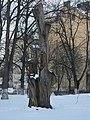 Россия, Ленинградская обл., Выборг, парк-эспланада (парк Ленина), дерево, 29.03.2008 - panoramio.jpg