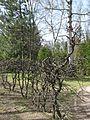 Сирецький дендропарк IMG 8986.jpg