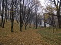 Украина, Киев - Голосеевский лес 146.jpg