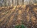 Украина, Киев - Голосеевский лес 222.JPG