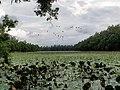 আলতাদিঘী জাতীয় উদ্যান.jpg
