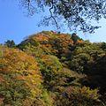 中津峡-紅葉-06 - panoramio.jpg