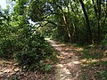 义务植树基地步道入口 - Entrance of Voluntary Tree Planting Station Trail - 2015.07 - panoramio.jpg