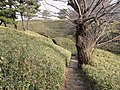 台場公園 - panoramio (28).jpg