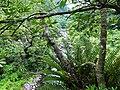 大羅蘭溪 Tranan Creek - panoramio (2).jpg