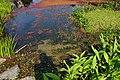 朱銘美術館生態池 Ecological Pond in Juming Museum - panoramio.jpg