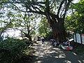 草嶺古道 Caoling Historic Trail - panoramio (6).jpg