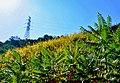 雅玛里克山植被.jpg