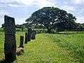 02-003-DSA Parque arqueológico del Caño -- Monolitos.jpg