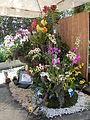 05557jfMidyear Philippines Orchid Exhibits Quezon Cityfvf 24.JPG