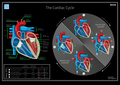 07 Hegasy Cardiac Cycle Wiki EN CCBYSA.png