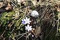 125 Bacín nové kytky v lese.JPG