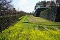 140321 Shimabara Castle Shimabara Nagasaki pref Japan09s3.jpg