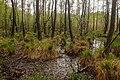 15-05-09-Biosphärenreservat-Schorfheide-Chorin-Totalreservat-Plagefenn-DSCF5538-RalfR.jpg