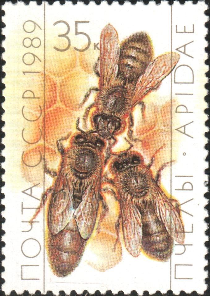 1989 CPA 6072 mint