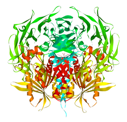 Dipeptidylpeptidase 4