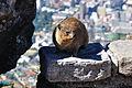 2011-02-06 14-58-20 South Africa - Bakoven.jpg