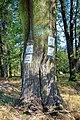 2012 Powiat cieszyński, Zebrzydowice, Znaki szlaków rowerowych na drzewie.jpg