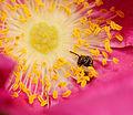 2014-06-23 12-52-58 hymenoptera.jpg