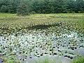 2014 Bald Eagle State Park Frog Pond.jpg