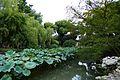2015-09-24-141311 - Suzhou, Garten des bescheidenen Beamten.jpg