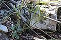 2015.05.30 13.00.33 IMG 2511 - Flickr - andrey zharkikh.jpg
