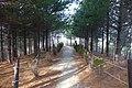 20150321서울시공무원 속초연수원 산책길92.jpg