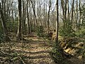 2016-03-01 14 32 33 A trail alongside a severely eroded tributary of Little Difficult Run within Fred Crabtree Park in Reston, Fairfax County, Virginia.jpg