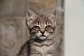 2016-06-25 Wikimania, Cat (freddy2001) (02).jpg