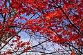 20181108 Atsubetsu 6596 (48437561137).jpg