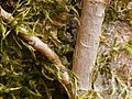 2021-04-12 14-31-38 detail-arbre.jpg