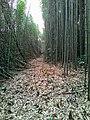 313, Taiwan, 新竹縣尖石鄉義興村 - panoramio (1).jpg
