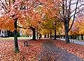 3553 Beech Trees, The Promenade (8176302224).jpg