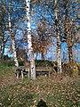 3 weisse birken - panoramio.jpg