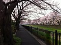 4 Chome Sazumachi, Chōfu-shi, Tōkyō-to 182-0016, Japan - panoramio (6).jpg