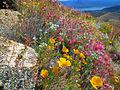 4 Peaks Flora 4.jpg
