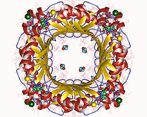 Dihydroneopterin aldolase - Image: 5f 3m