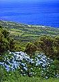 Açores 2010-07-19 (5054449939).jpg
