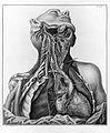 A. Scarpa, Tabulae nevrologicae; ecorche Wellcome L0013276.jpg